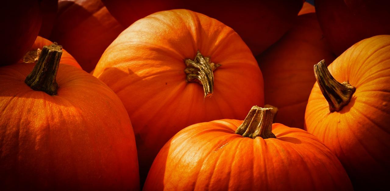 thanksgiving-pumpkins-orange