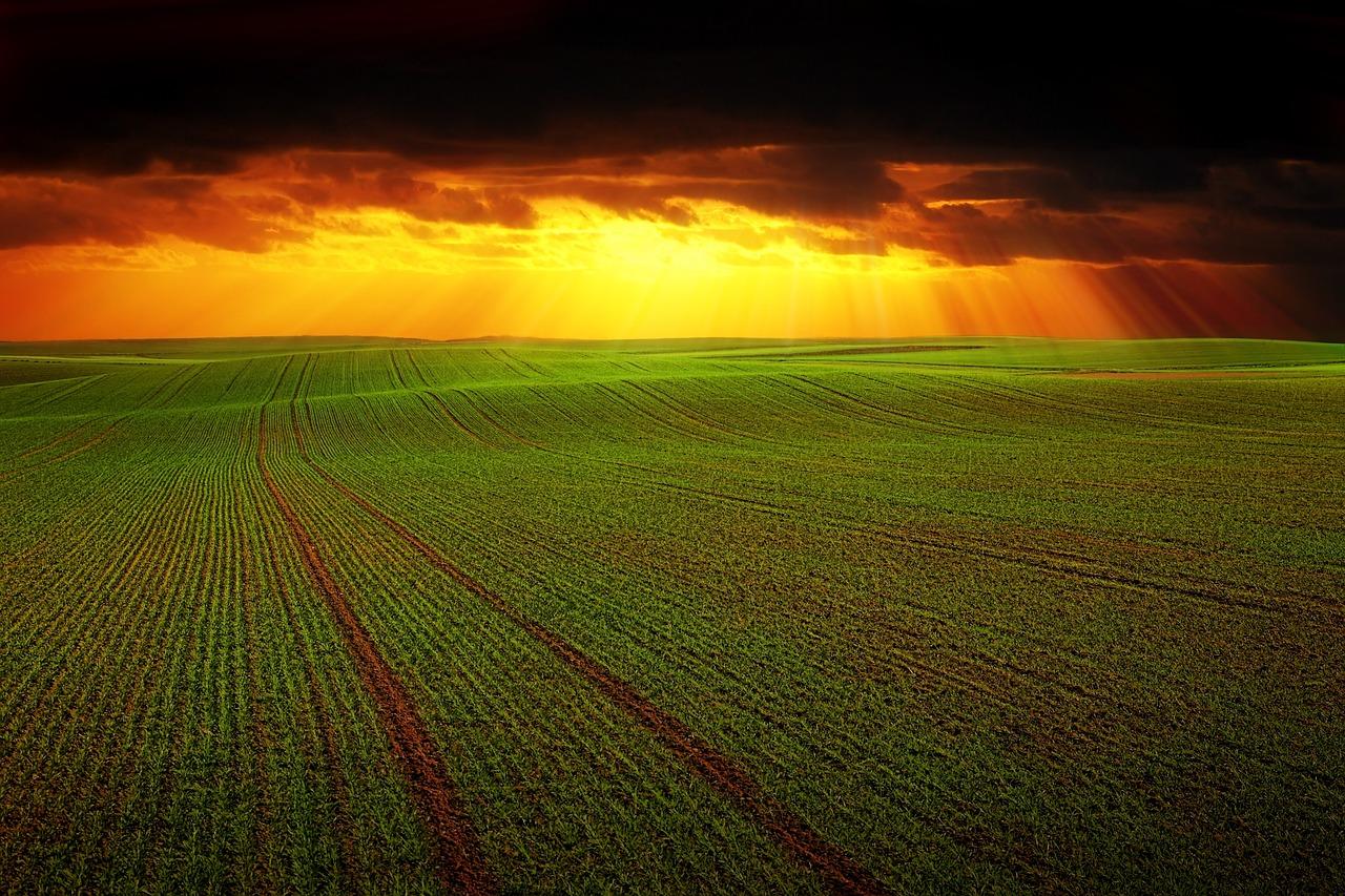 fourth-dimension-agriculture-origin-branding